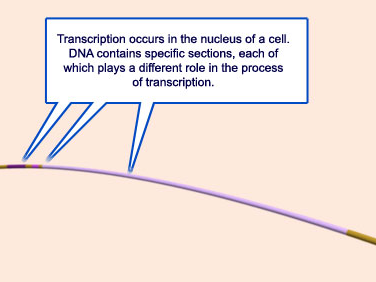 The complexity of  transcription through RNA polymerase enzymes  and general transcription factors in eukaryotes 110