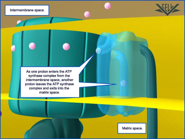 The irreducibly complex ATP Synthase nanomachine, amazing evidence of design 114110