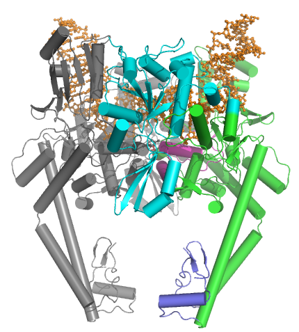 Topoisomerase II enzymes, amazing evidence of design 2rgr10