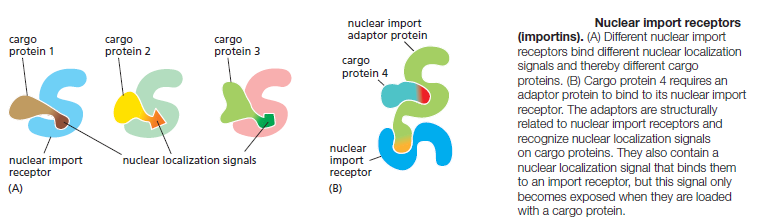 Complexity of the cell's transport and communication system 3rtyrs13