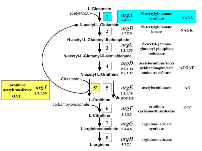 Amino Acids: Origin of the canonical twenty amino acids required for life Argini10