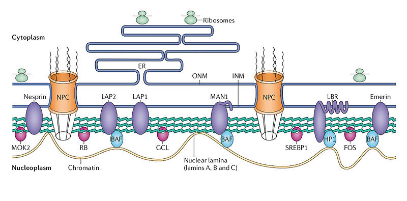 The amazing organisation and design of DNA, genomes, histones, nucleosomes chromosomes Copper10