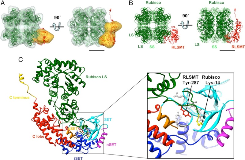 The Rubisco enzymes amazing evidence of design Dfgdf10
