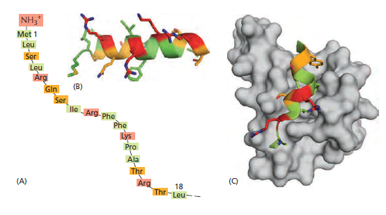 The Transport of Proteins into Mitochondria  Et345610