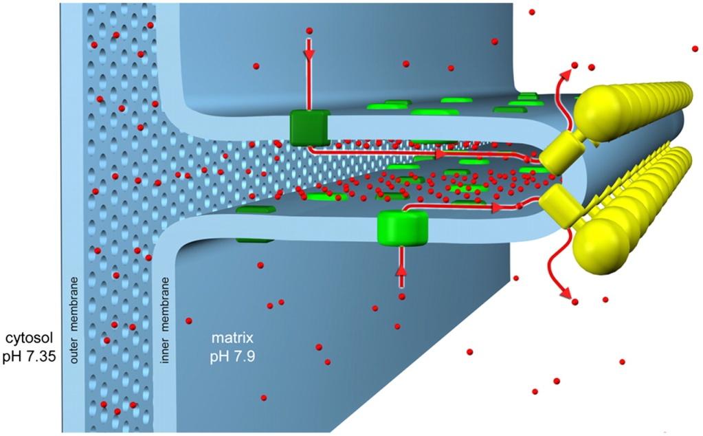 The irreducibly complex ATP Synthase nanomachine, amazing evidence of design F5_lar11