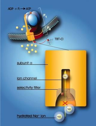 The irreducibly complex ATP Synthase nanomachine, amazing evidence of design F5_lar14