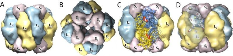 The Rubisco enzymes amazing evidence of design Figure12
