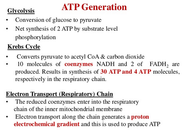 ATP: The  Energy  Currency for the Cell  Gfdfew11