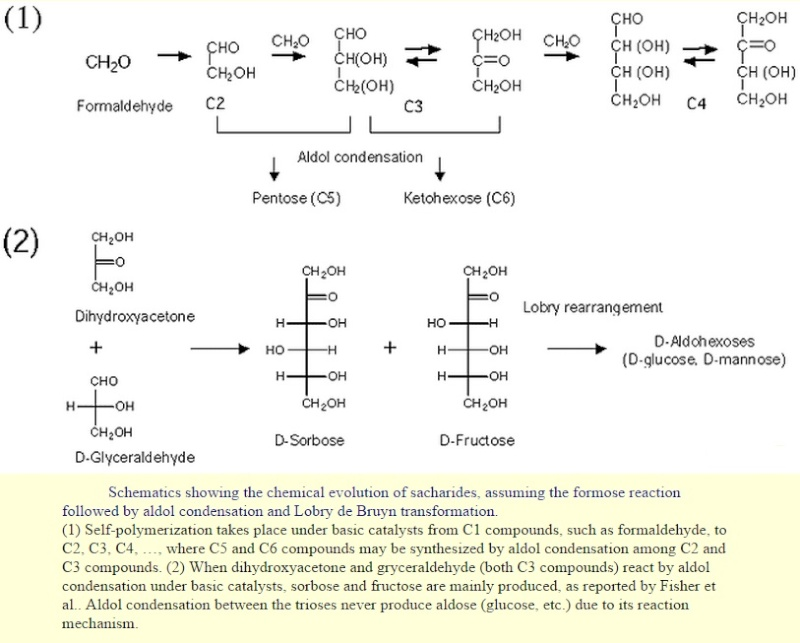 "Carbohydrates and glycobiology:  the ""3rd alphabet of life"" after DNA and proteins Glycow11"