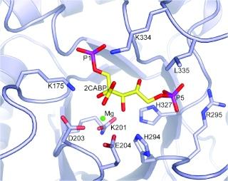 The Rubisco enzymes amazing evidence of design Iouio10