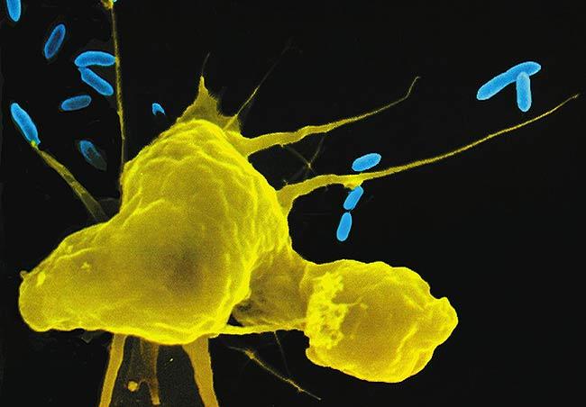 Microglia the Most Intelligent Brain Cells Macrop10