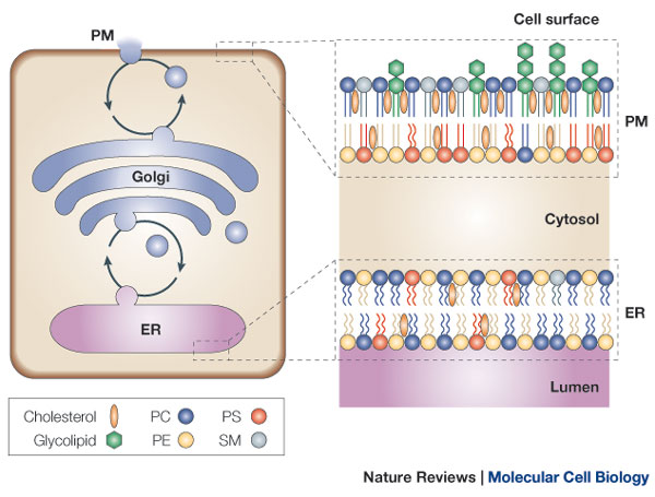 Cell Membranes, origins through natural mechanisms, or design ? Nrm15910