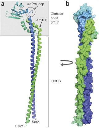The irreducibly complex ATP Synthase nanomachine, amazing evidence of design Nsmb_118