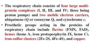 The electron transport chain Retert11