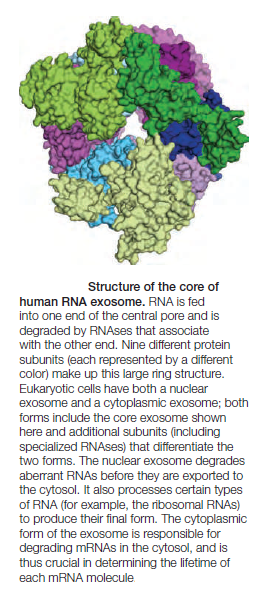 Complexity of the cell's transport and communication system Rna_ex10
