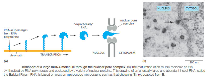 Complexity of the cell's transport and communication system Rna_ex11