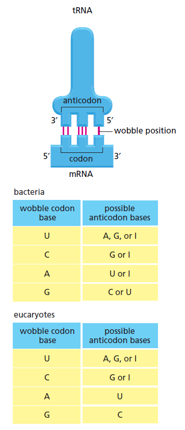 Origin of  translation of the 4 nucleic acid bases and the 20 amino acids, and the universal assignment of codons to amino acids Rterte10