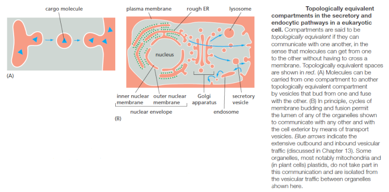 Complexity of the cell's transport and communication system Rweewr10