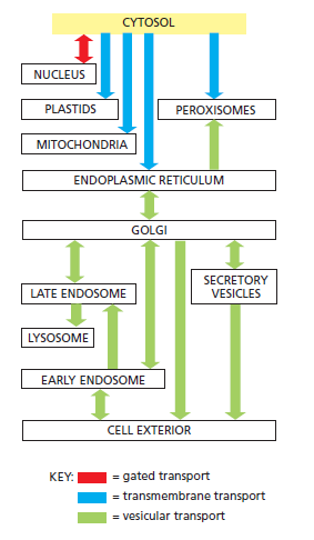 Complexity of the cell's transport and communication system Rwersd10