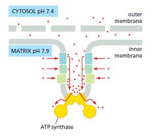 The irreducibly complex ATP Synthase nanomachine, amazing evidence of design Ry45ry10