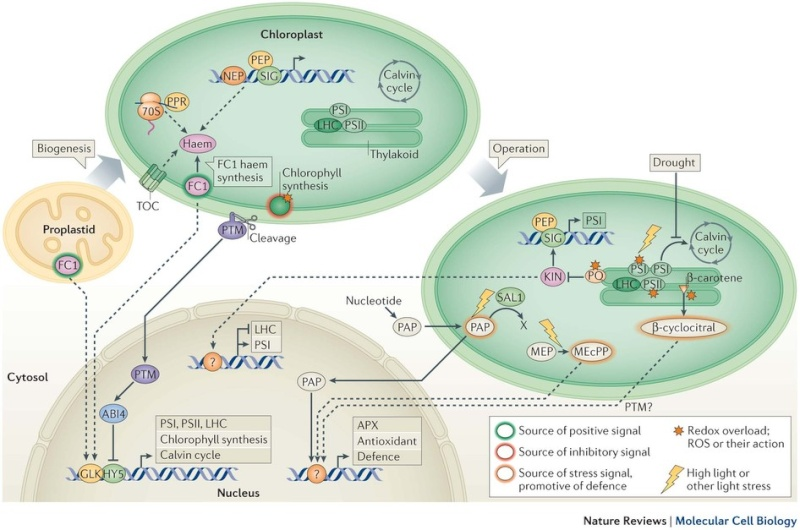 Pathways and mechanisms of protein import and targeting in chloroplasts Sdfsd13