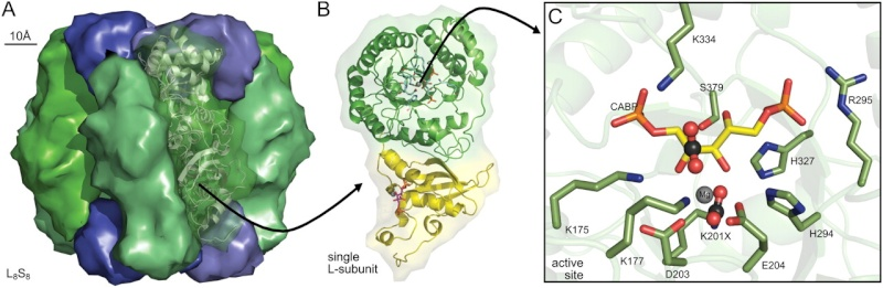 The Rubisco enzymes amazing evidence of design Sdfsdk10