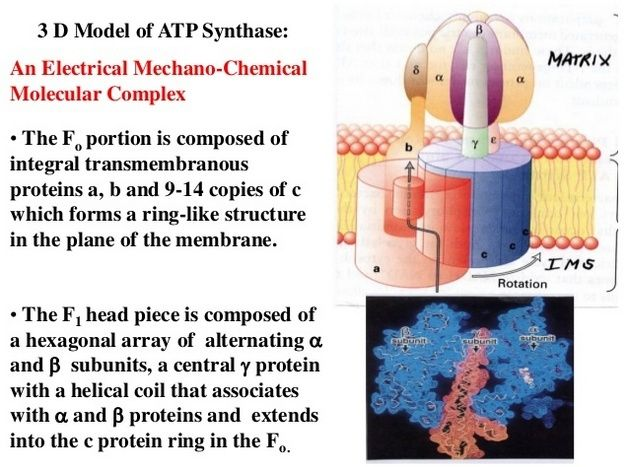 The irreducibly complex ATP Synthase nanomachine, amazing evidence of design Sdfsfd10