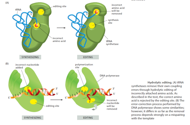 Origin of translation of the 4 nucleic acid bases and the 20 amino acids, and the universal assignment of codons to amino acids Sdfssd10