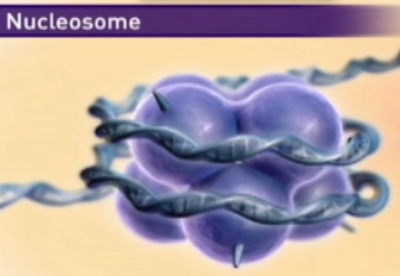 The amazing organisation and design  of DNA, genomes, histones, nucleosomes chromosomes Sem_ty12