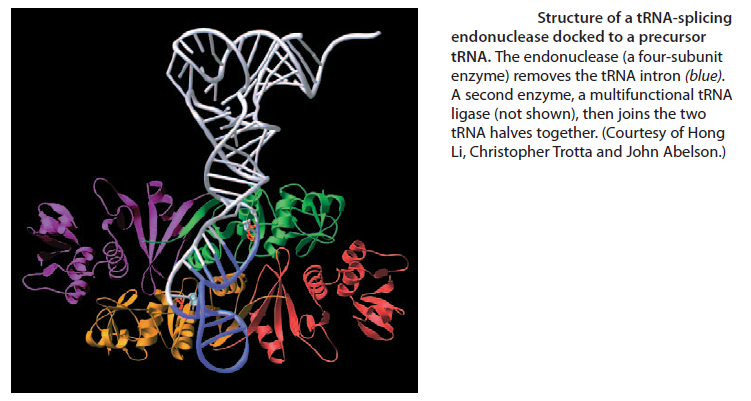 Transfer RNA, and its biogenesis Sem_ty12