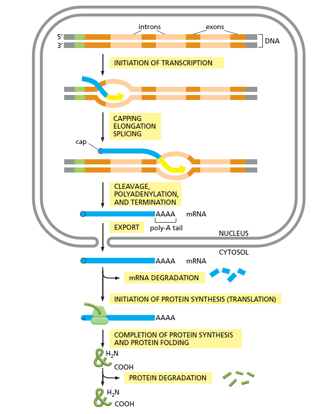 The cell is a interdependent irreducible complex system Sem_ty15