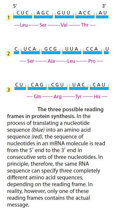 Origin of translation of the 4 nucleic acid bases and the 20 amino acids, and the universal assignment of codons to amino acids Sem_ty20