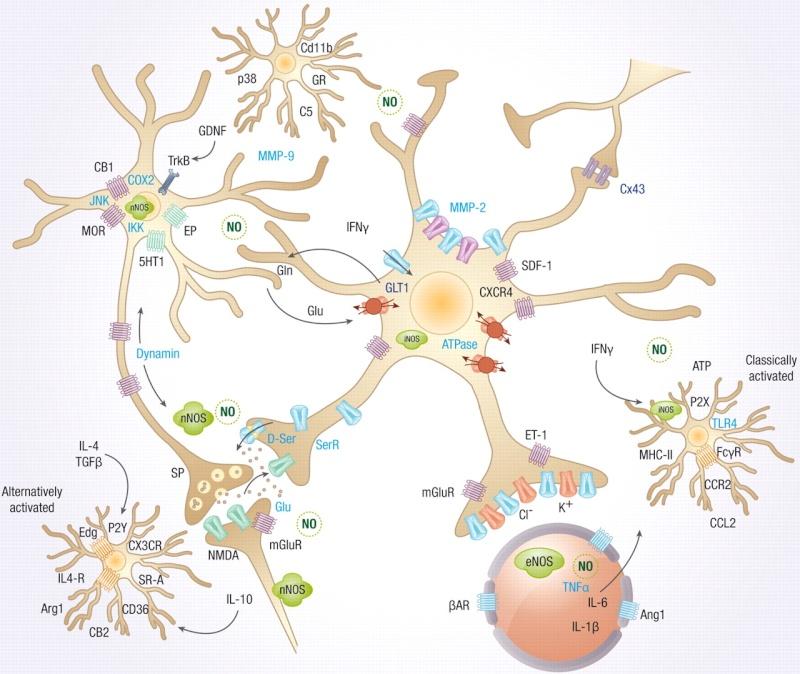 Microglia the Most Intelligent Brain Cells Signal10
