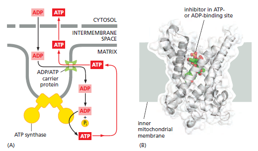 The irreducibly complex ATP Synthase nanomachine, amazing evidence of design Trtrt10