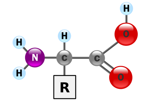 How  biosynthesis of amino acids points to a created process Tumblr11