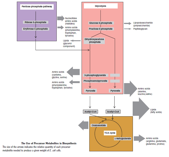 Major metabolic pathways and their inadequacy for origin of life proposals Tyeter10