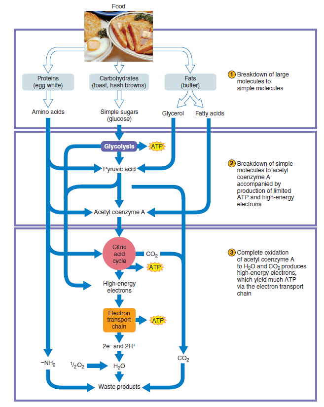 Major metabolic pathways and their inadequacy for origin of life proposals Uiouio10