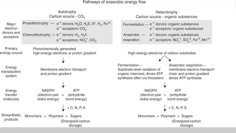 Bioenergetics and Life's Origins Uiouiu10