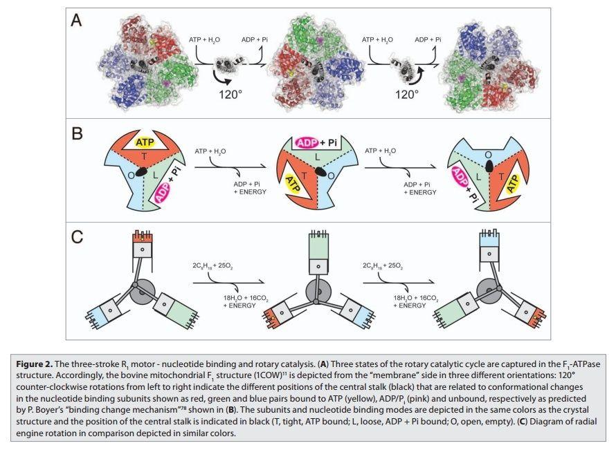 The irreducibly complex ATP Synthase nanomachine, amazing evidence of design Uuoo7u11