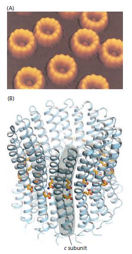 The irreducibly complex ATP Synthase nanomachine, amazing evidence of design Yuiyuu10