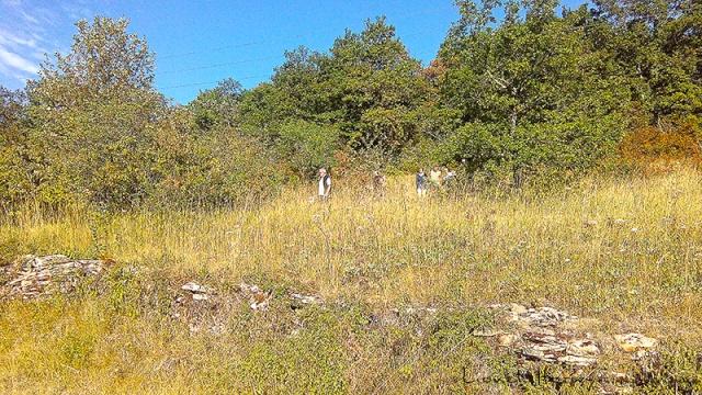 Sur le Chemin des Cadeules - Balade du 02 Août 2015 01_img11