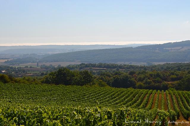 Sur le Chemin des Cadeules - Balade du 02 Août 2015 10_dsc10
