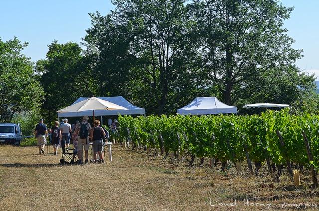 Sur le Chemin des Cadeules - Balade du 02 Août 2015 17_dsc10