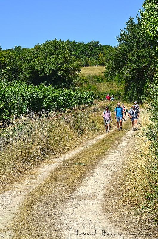 Sur le Chemin des Cadeules - Balade du 02 Août 2015 23_dsc10