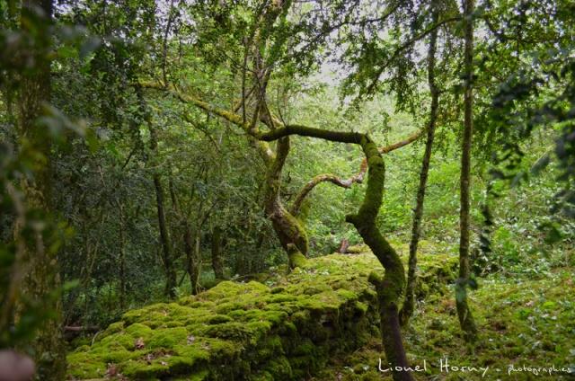 Sur le Chemin des Cadeules - Balade du 02 Août 2015 44_lon10
