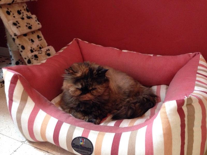 Lola descansa en el Arco Iris 07611
