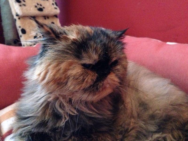 Lola descansa en el Arco Iris 07710