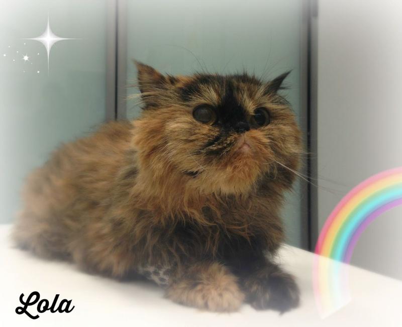 Lola descansa en el Arco Iris Arco_i11