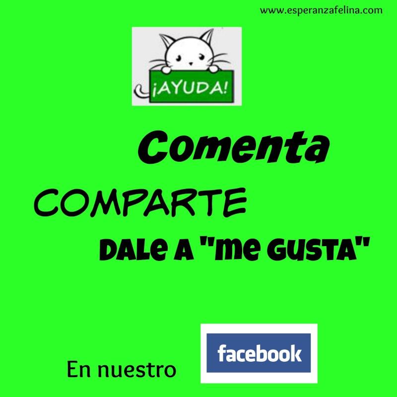 Perfil de Facebook de Esperanza Felina Compar10