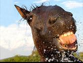 [EVENTO ESPECIAL]Horse Race Sin_ty10
